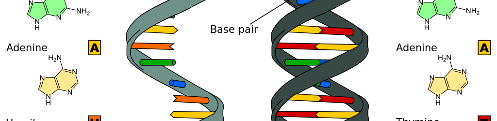 RNA and DNA are very similar in structure although they perform different functions in the cell.