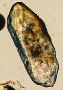 A zircon crystal is the oldest surviving relic of early Earth formation, some have been dated to 4.4 billion years old.