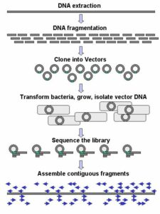 DNA sequencing is like putting together a giant puzzle.
