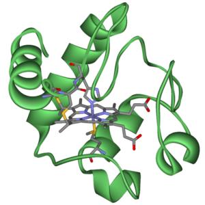 This is an illustration of the three-dimensional structure of a biologic protein - cytochrome